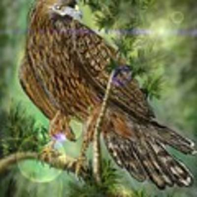 Hawk In The Evergreens Art Print by Darren Cannell
