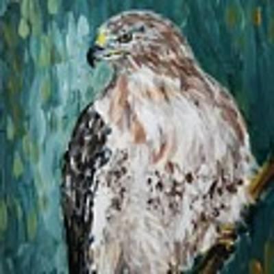 Hawk Art Print by Maria Langgle