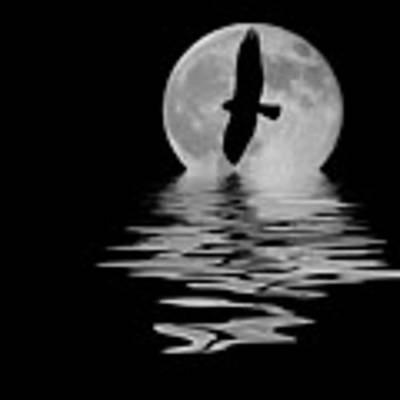 Hawk In The Moonlight 2 Art Print by Shane Bechler