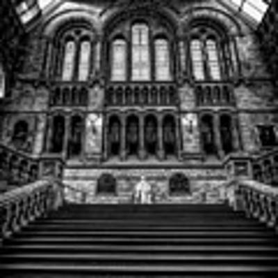 History Museum London Art Print by Adrian Evans