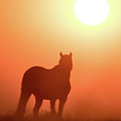 Horse Silhouette Art Print by Wesley Aston