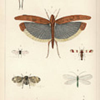 Insects, Plate IIi Art Print by Antoine Sonrel