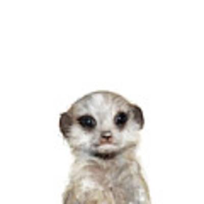 Little Meerkat Art Print by Amy Hamilton