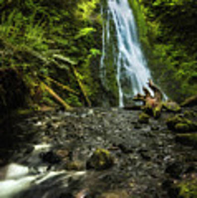 Madison Falls - An Elwha Sanctuary Art Print by Expressive Landscapes Fine Art Photography by Thom
