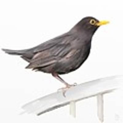 Ms. Blackbird Is Brown Art Print by Ivana Westin