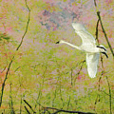 On The Wing Art Print by Belinda Greb