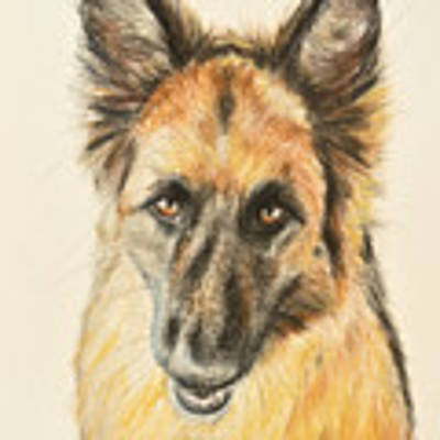 Painting Of A German Shepherd Art Print by Kate Sumners