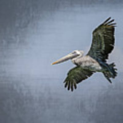 Pelican Flight Art Print by Carolyn Marshall