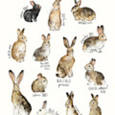 Rabbits And Hares Art Print