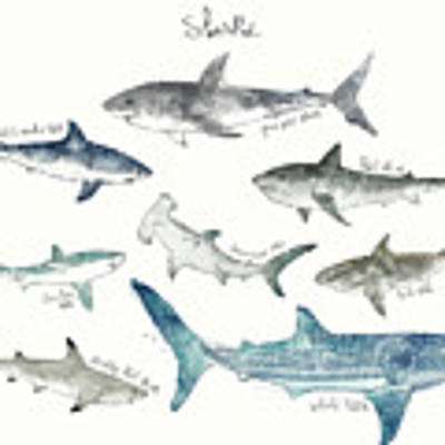 Sharks - Landscape Format Art Print by Amy Hamilton