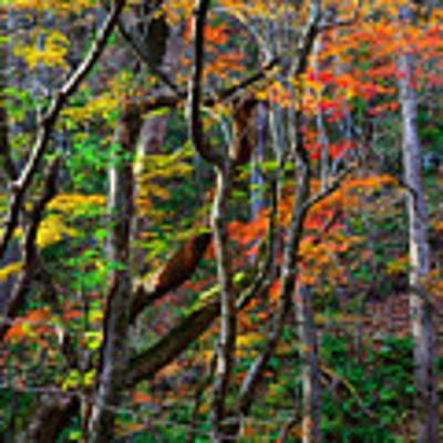 Splash Of Autumn Art Print by Brad Brizek