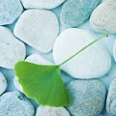 Stones And A Gingko Leaf Art Print