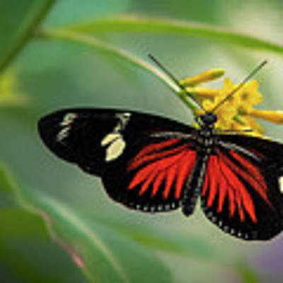 Butterfly, Stop And Smell The Flowers Art Print by Cindy Lark Hartman