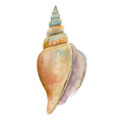 Strombus Vittatus Shell Art Print
