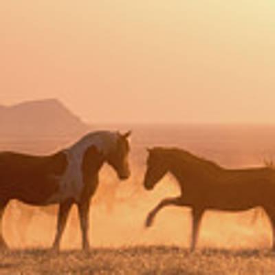 Wild Horse Glow Art Print by Wesley Aston
