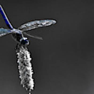 Dragonfly Art Print by Lita Kelley