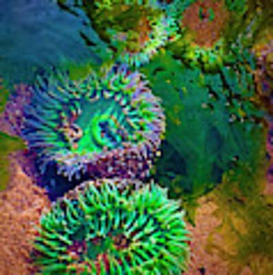 Anemone In Tide Pool Art Print by Dee Browning