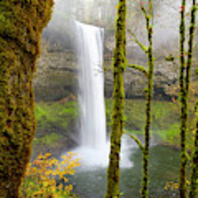 Autumn At Silver Falls State Park Art Print by Nicole Young