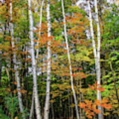Autumn Grove, Vertical Art Print by Dawn Richards