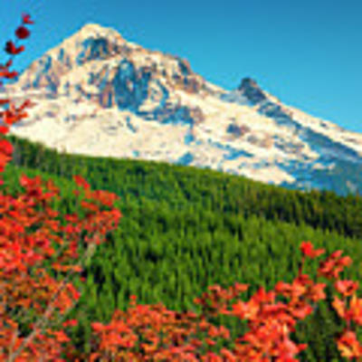 Autumn In Lolo Pass Mt. Hood National Forest Art Print by Dee Browning