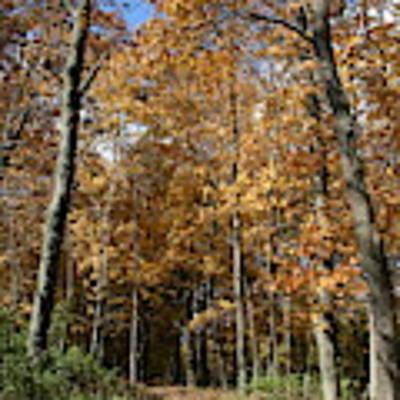 Autumn Pathway Art Print by Dylan Punke