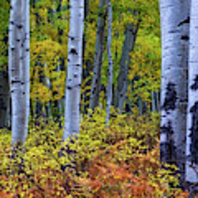 Colors Of October Art Print by John De Bord