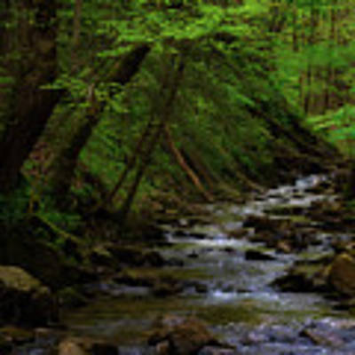 Creek Flowing Through Shady Forest Art Print by Dee Browning