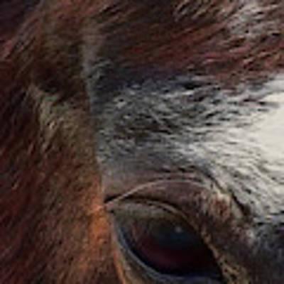 Eye Of A Horse  Art Print by Shelli Fitzpatrick