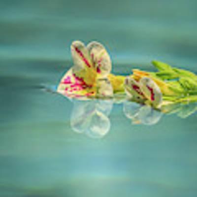 Floating Petunia Art Print by Dawn Richards