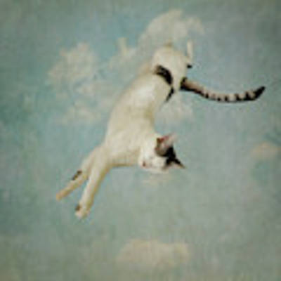 Flying Cat Art Print by Sally Banfill