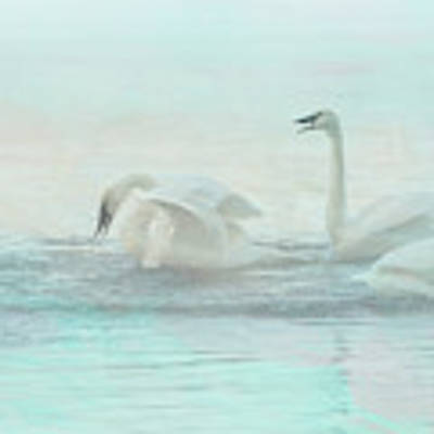 Four Swans Watercolor Group Play Art Print by Patti Deters