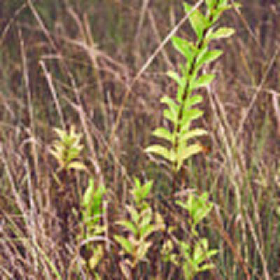 In Tall Grass Art Print by Whitney Goodey