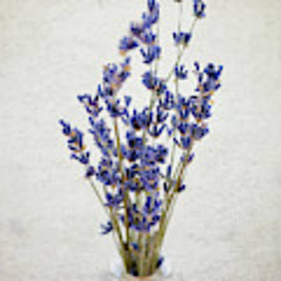 Lavender Art Print by Nicole Young