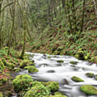 Mossy Stream Art Print by Nicole Young