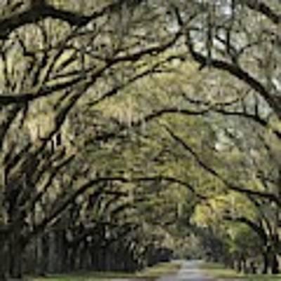 Oak Tree Arch Art Print by Bradford Martin