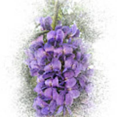 Purple Texas Mountain Laurel Flower Cluster Art Print by Patti Deters