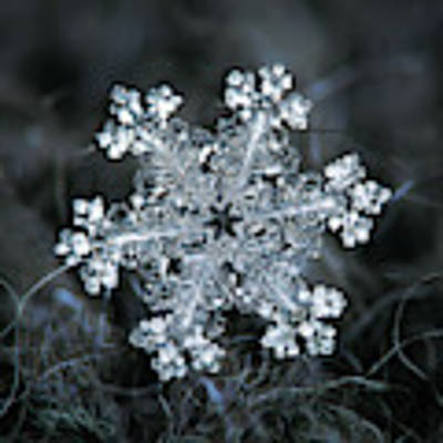 Real Snowflake - 26-dec-2018 - 1 Art Print by Alexey Kljatov
