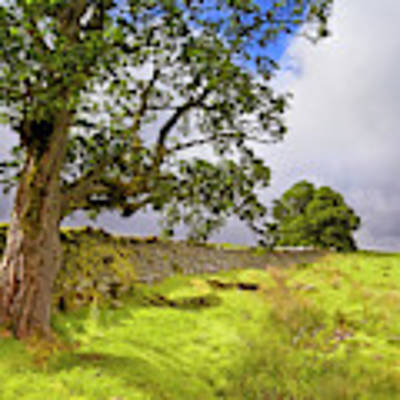 Silent Sentinel - Acharn Scotland - Drystane Dyke Art Print by Jason Politte