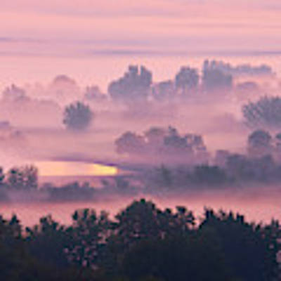 Trees In The Mist Art Print by Whitney Goodey