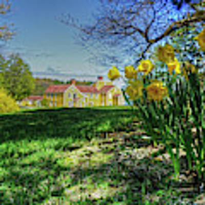 Wentworth Daffodils Art Print by Wayne Marshall Chase