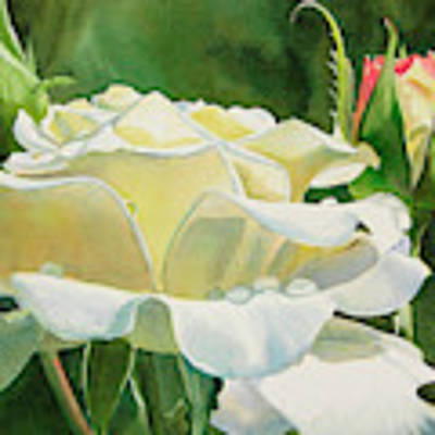 White Rose With Raindrops Original by Sharon Freeman