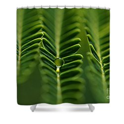 A Green Drop Shower Curtain by Michelle Meenawong