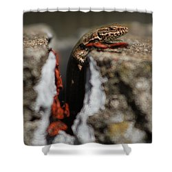Shower Curtain featuring the photograph  A Lizard Emerging From Its Hole by Stwayne Keubrick
