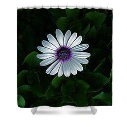 One Single Flower Shower Curtain by Rita Mueller