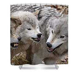 Shower Curtain featuring the photograph  Alpha Displeasure 2 by Wolves Only