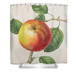 An Apple Shower Curtain by Elizabeth Jane Hill