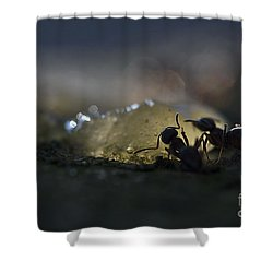 Shower Curtain featuring the photograph  Ant Silhouette  by Odon Czintos