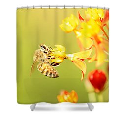 Bee On Milkweed Shower Curtain