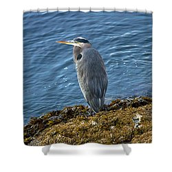 Shower Curtain featuring the photograph  Blue Heron On A Rock by Eti Reid