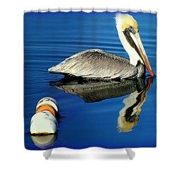 Blues Pelican Shower Curtain by Karen Wiles